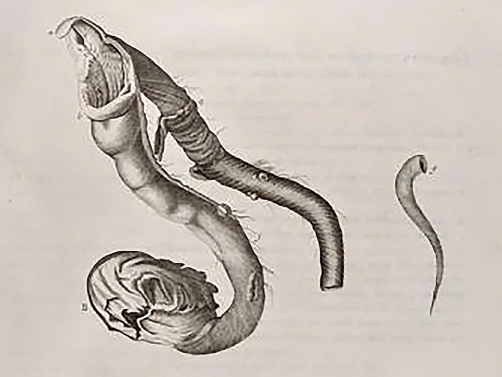 Physis intestinalis